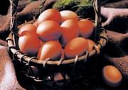 14-223卵イメージ