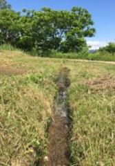 清冽な用水…飯豊連峰の雪解け水が美味しいさゆり米を育む…丁寧に畦の草刈りがされていて、有機米作りを上流の棚田から取り組んできたことが推察される。